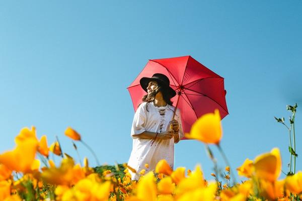 赤い日傘を差し黒い帽子を被って黄色い花畑を歩く女性の画像