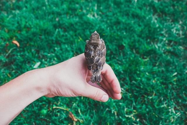 筒状にした左手の上に小鳥が止まっている画像