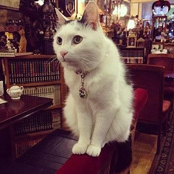 正社員猫の「五右衛門」