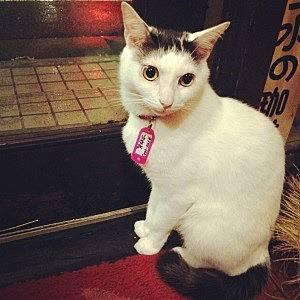 正社員猫の「次郎長」
