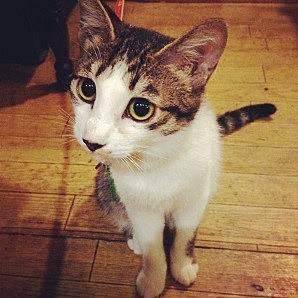 正社員猫の「石松」